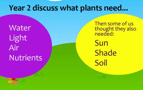 y2_plants001
